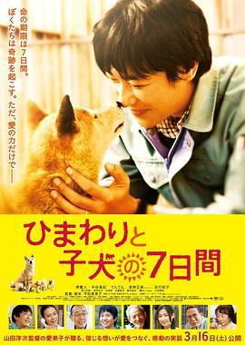 剧情电影《向日葵与幼犬的7天》解说文案